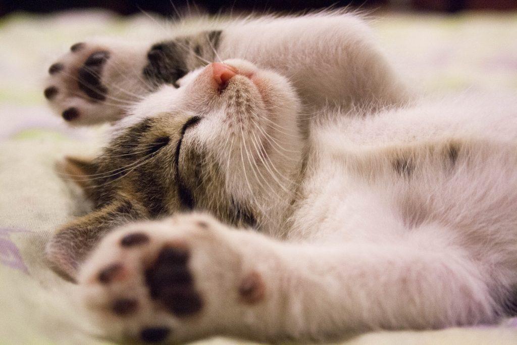 Kleine süße Katze schläft
